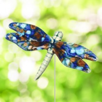 Multi Colored DragonFly